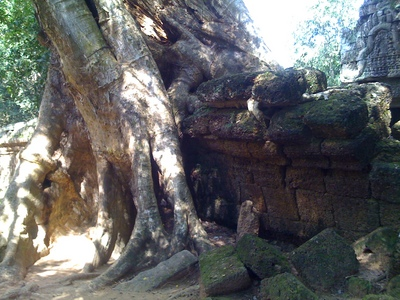 Tree1.JPGのサムネール画像のサムネール画像